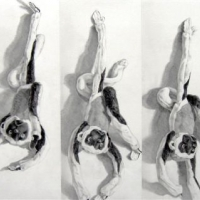 after-muybridge-no-2-gibbon-turning-while-pinned-22in-x36in-graphite-on-paper-1850